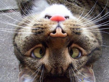 Vihainen Kani Naetko Kanin Kuvassa Funny Animals Funny Animal Pictures Cute Funny Animals