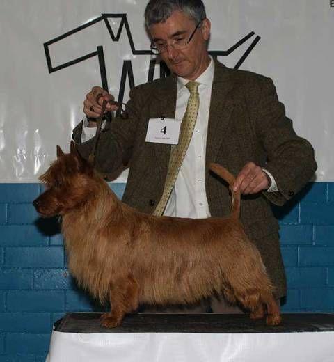 West Midland Terrier Society Photo By Rob Jones Australian