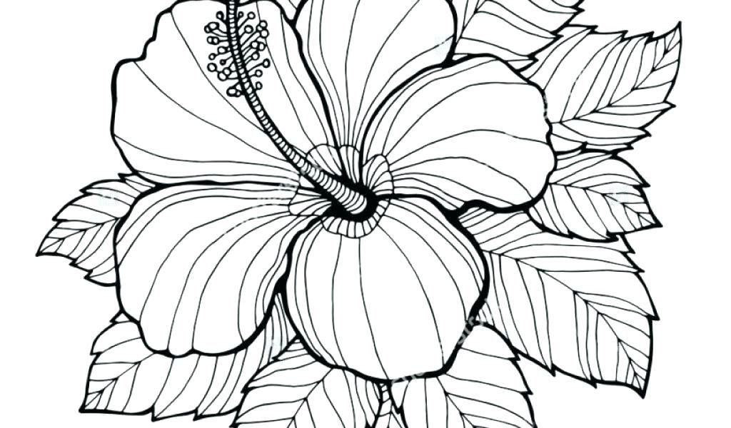 Hawaiian Flowers Coloring Pages Flower Coloring Pages Printable Best