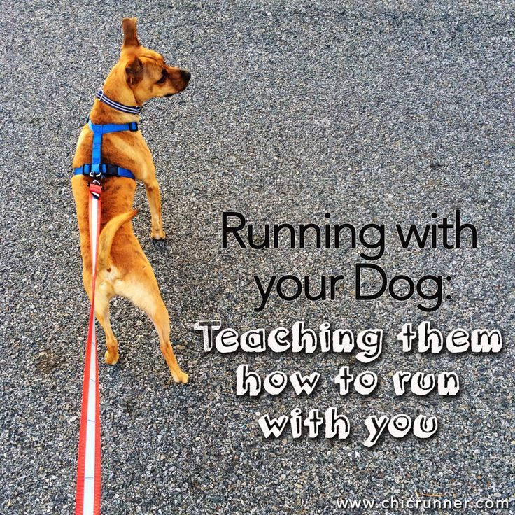Running With Your Dog Teaching Them How To Run With You