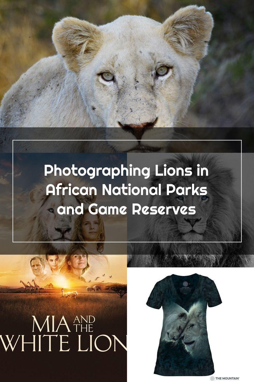 White Lion in Timbavati #NaturePhotography #WildlifePhotography #PhotoSafari #Kruger2Kalahari #KrugerPark #krugernationalpark  #lion #bigfive #whitelion