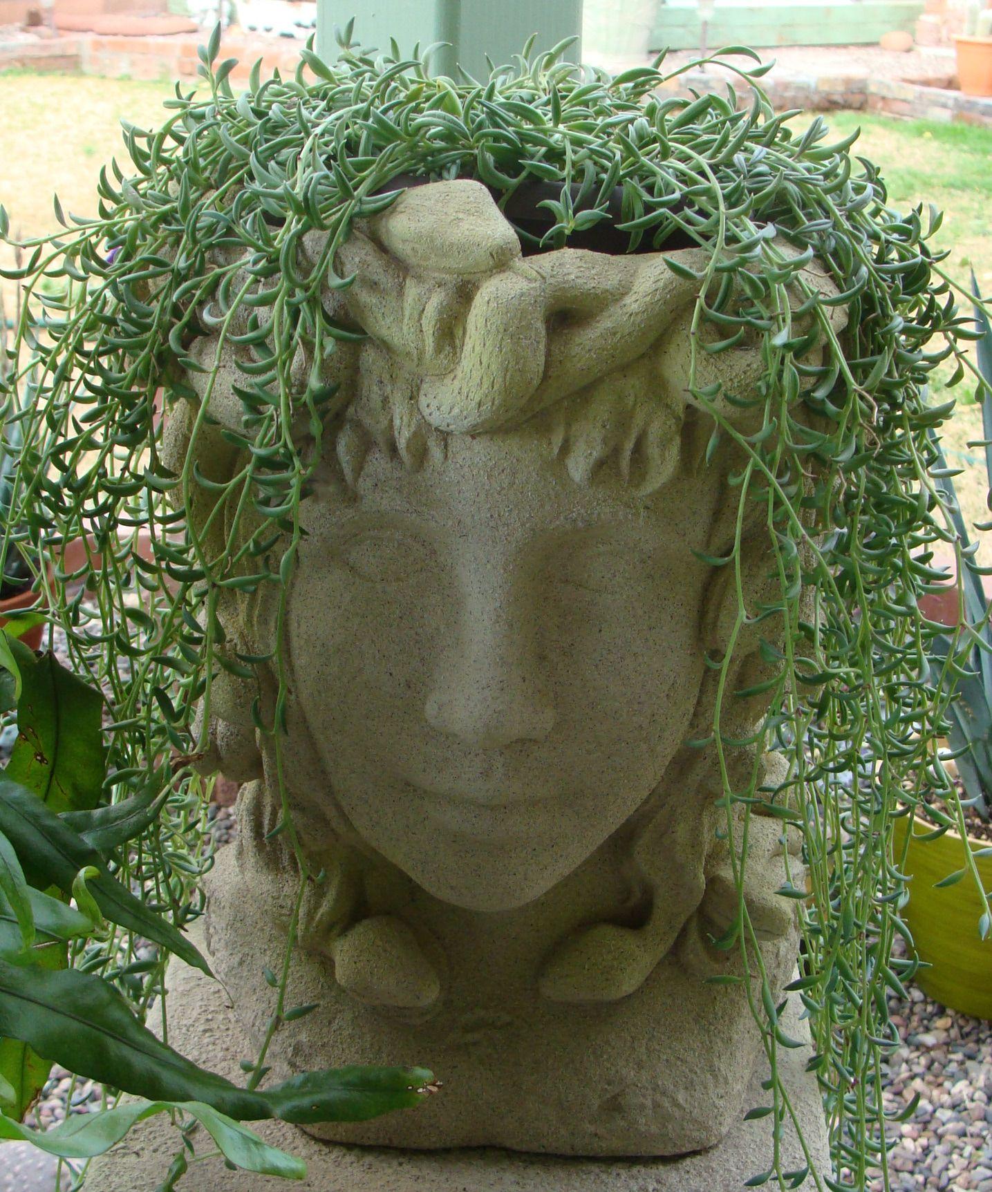 Pot Head Planters: My Medusa Head Planter