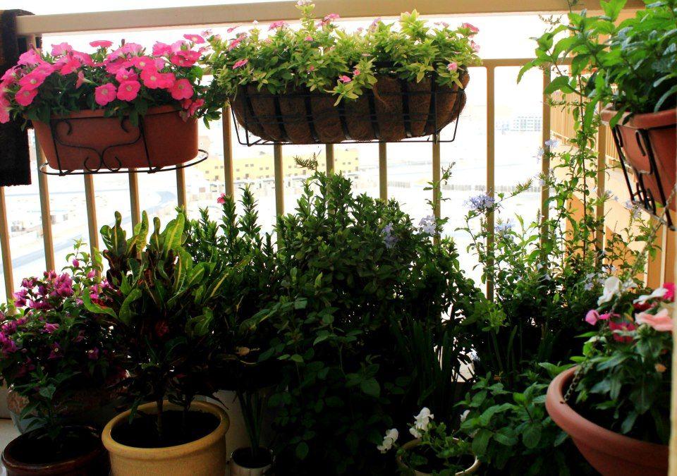 Dubai Garden Centre Best Balcony Competition Garden Soil Dubai Garden Palm Beach Gardens
