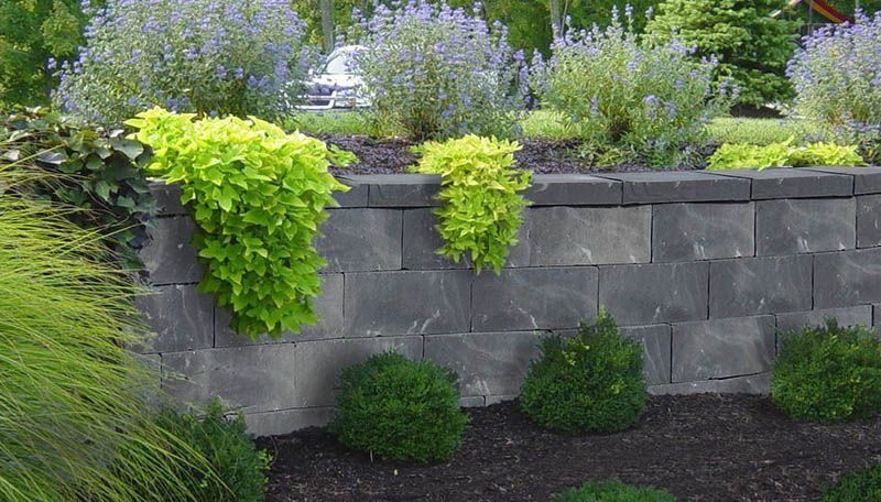 Green Ivy Plant Black Mulch Gray Block Back Yards Grade Change Modern Desi Modern Design In 2020 Ivy Plants Plants Privacy Landscaping Front Yard