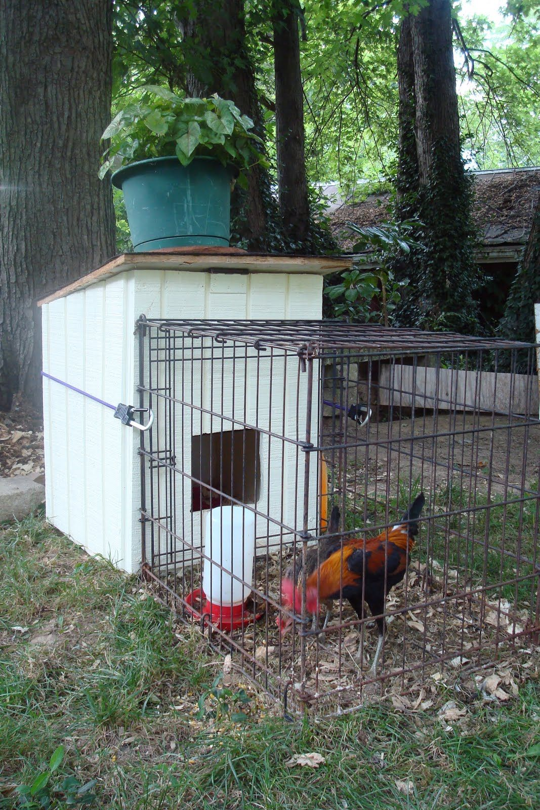 interesting little coop dog house attached to a dog kennel great