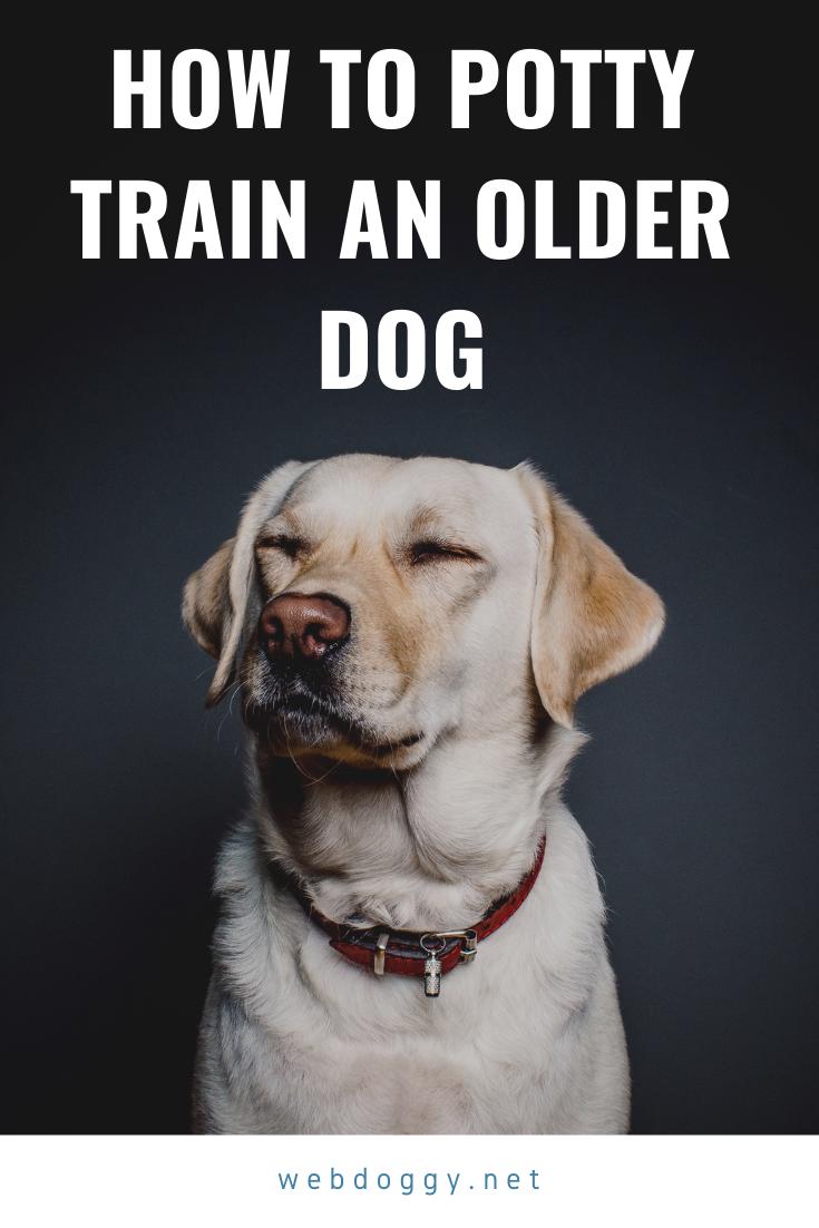 How To Potty Train An Older Dog In 2020 Dog Clicker Training Puppy Training Dog Behavior