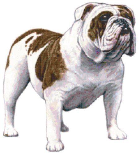 Bulldog Dog Counted Cross Stitch Pattern Boston Needleworks Http Www Amazon Com Dp B00f0n99gi Ref Cm Sw R Pi Dp Vai4sb07x5915 Bulldog Art Bulldog Bulldog Dog
