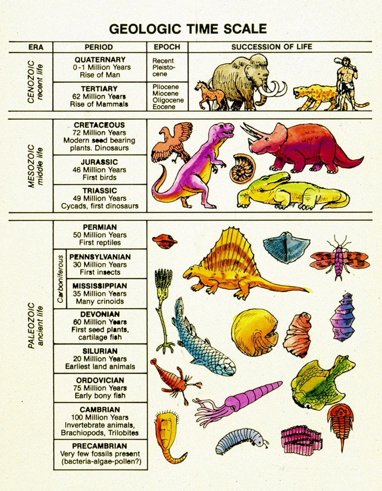 Geologic Time Scale At Nwcreation Life History 1 Billions Of