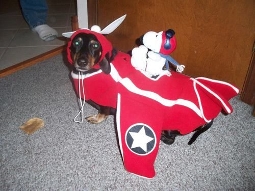 Snoopy Flying Ace Costume Dog Google Search Dog Costumes