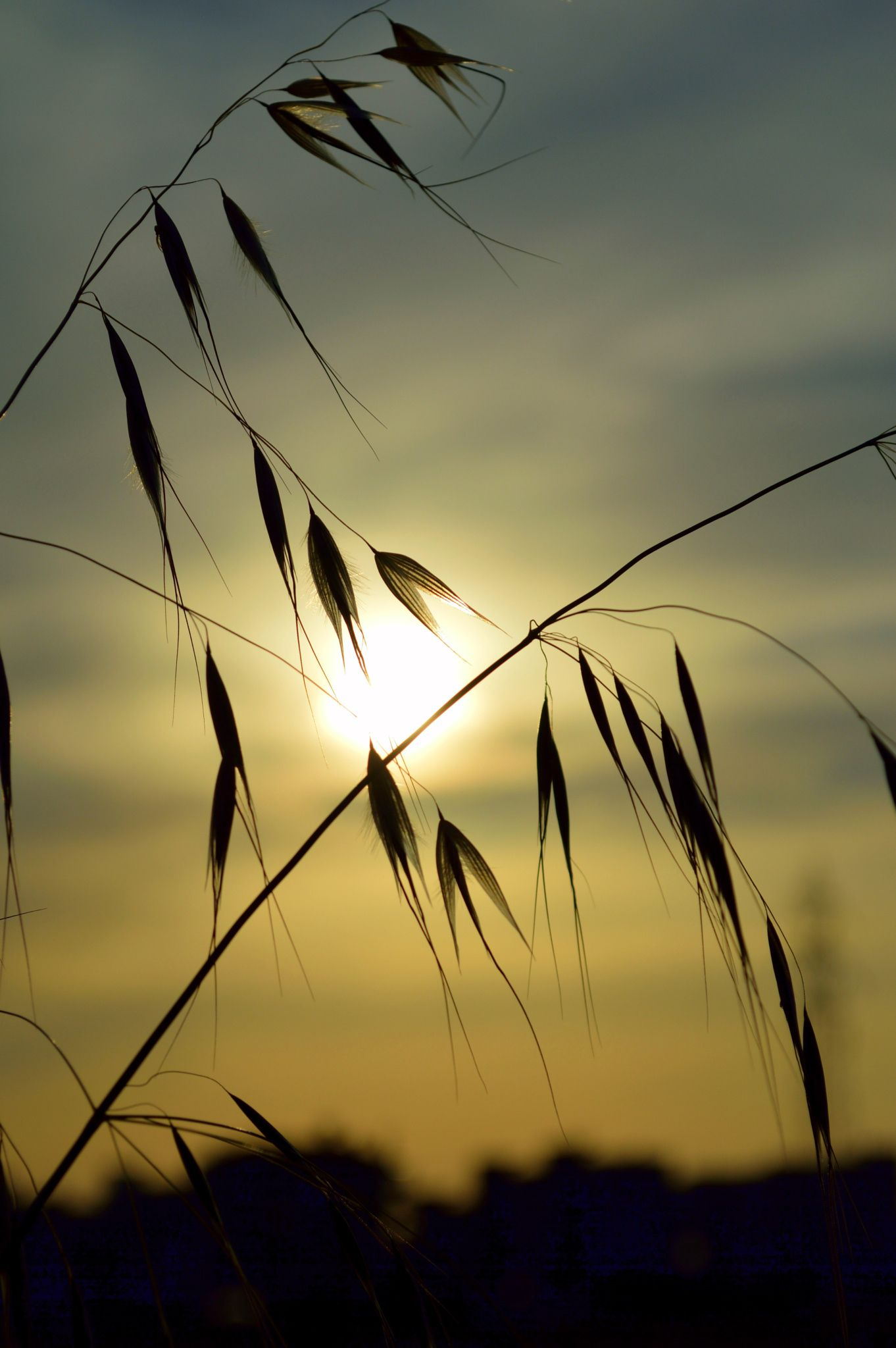 Photo Silhouettes of plants in the sunset by Papanikolaou Joanna on 500px