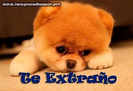 Resultado De Imagen Para Frases De Te Extraño Perros