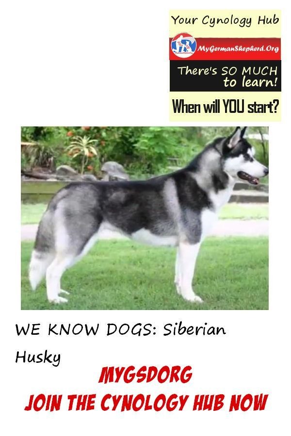 Happy With Dog Subscribe Dog Breeds Dog Lovers Dogs