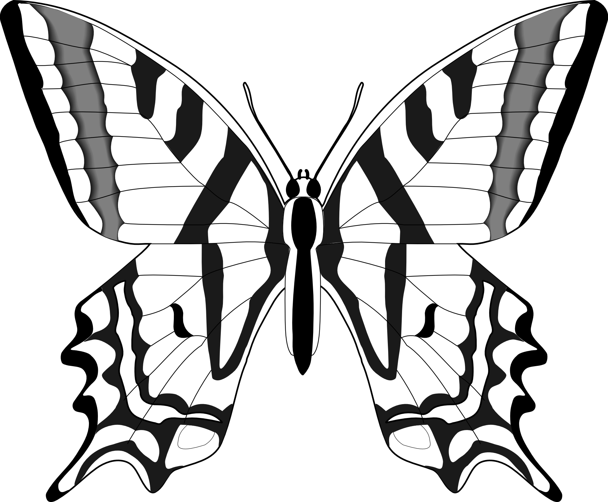 Simple Black And White Line Art : Simple black and white butterfly clipart butterflies