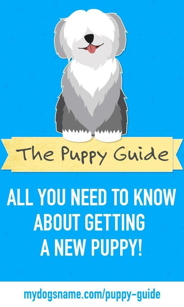 All The Steps To Raising A Puppy You Don T Want To Miss This Free