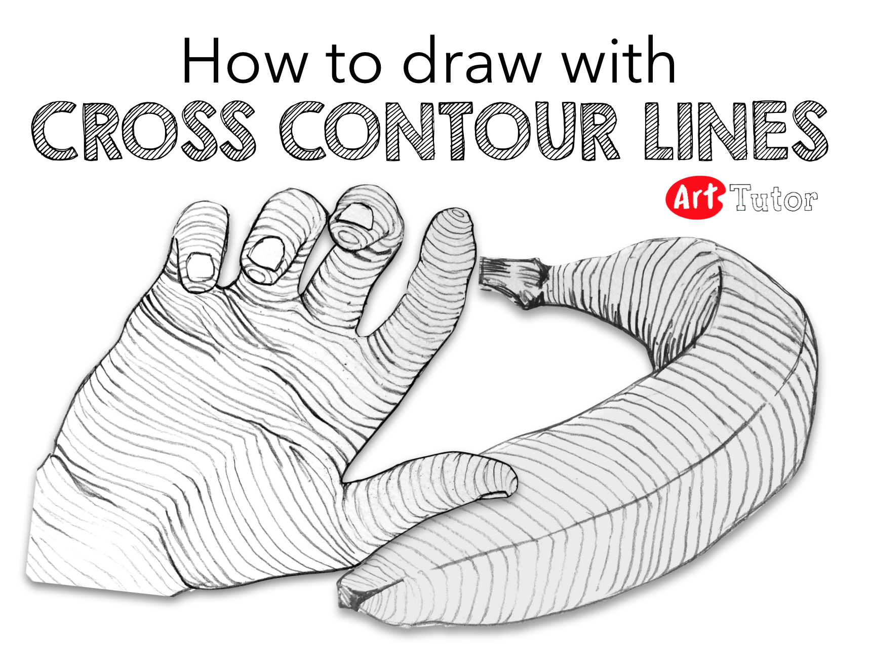Contour Line Drawing Demo : Cross contour drawing exercises are great for helping
