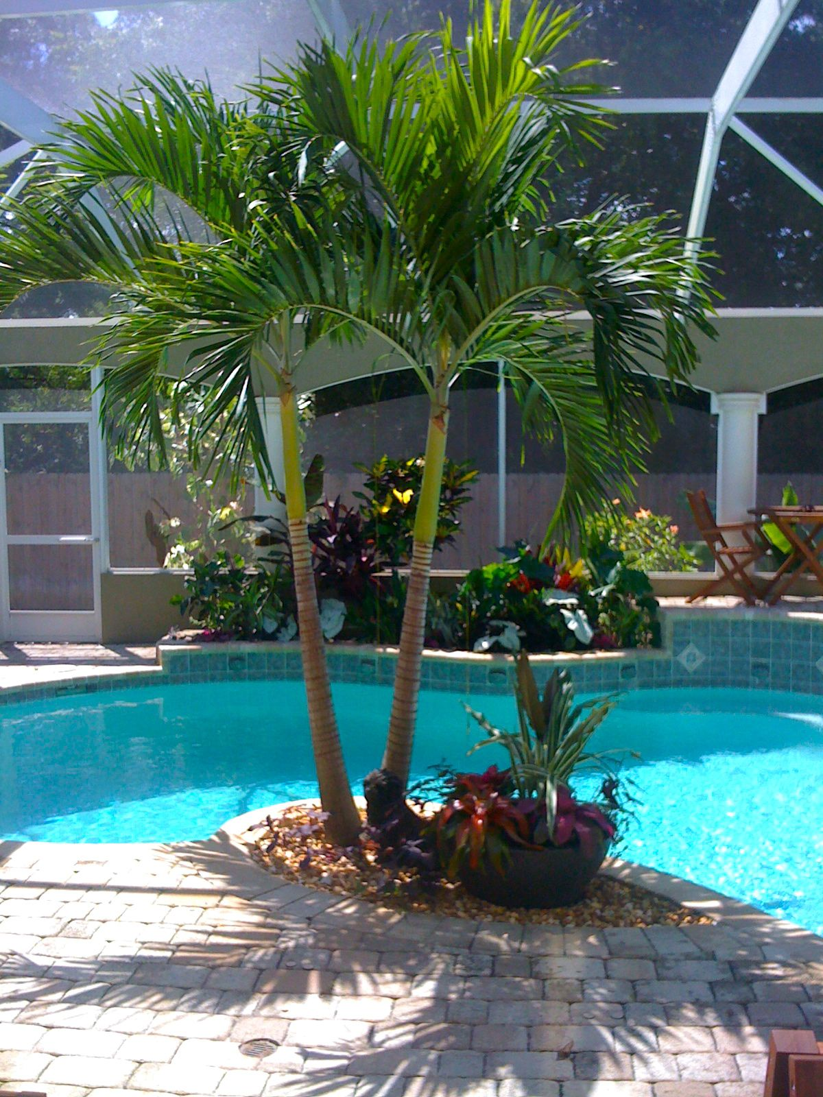 Tropical poolside landscape plantings tropical poolside for Outdoor garden pool