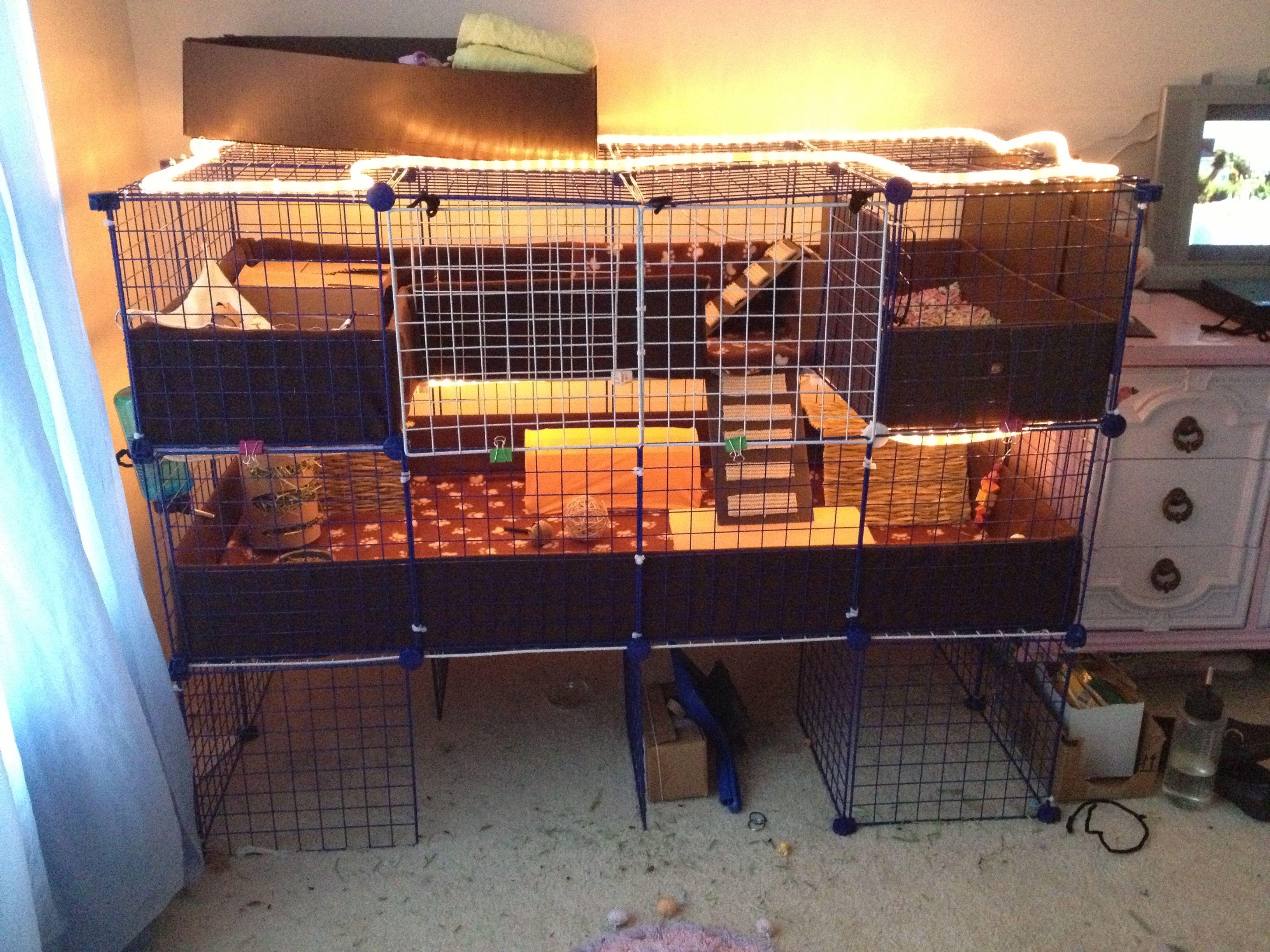 Pin By Karen Sabolcik On Guinea Pig Ideas For Bedding