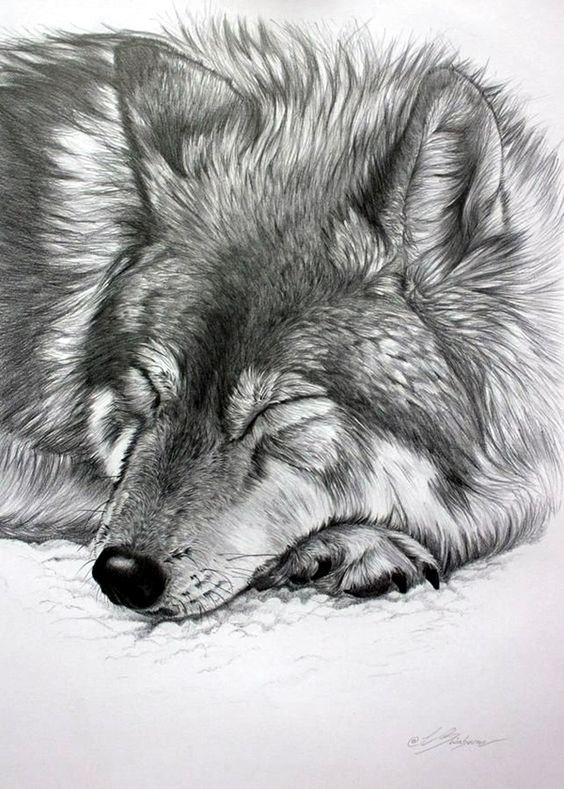 Realistic animal pencil drawings 3