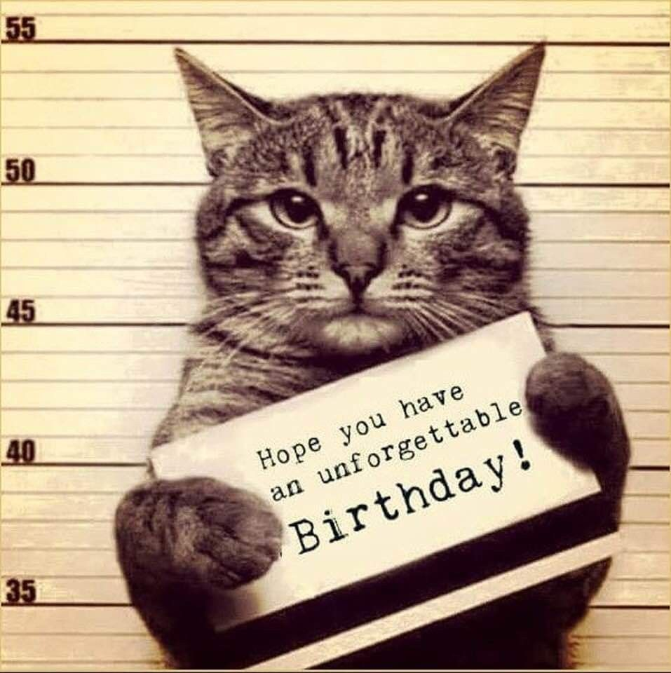 Pin by Lindis Russell on cat in 2020 Happy birthday cat