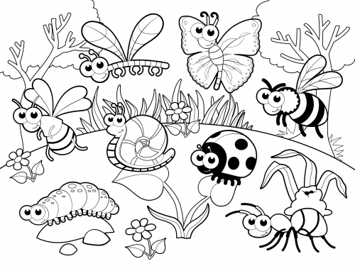 Detailed Coloring Page Bugs In Our Garden Preschool Art Summer Learning