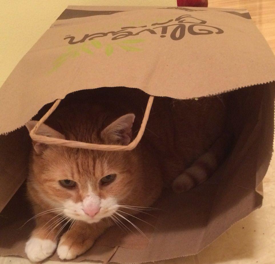 JJ hiding in the bag from Olive Garden. \
