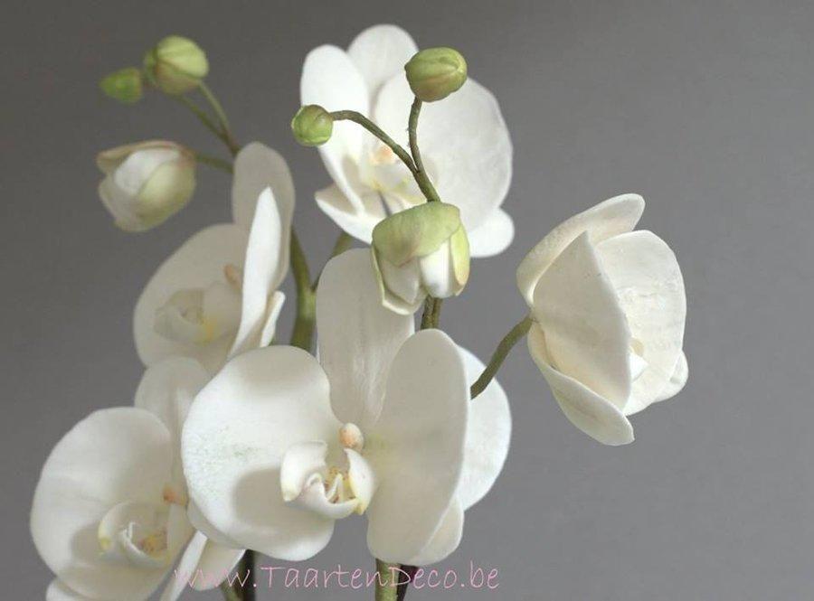 white+orchids+phaleanopsis+moth   Decoration for cakes   Pinterest ...