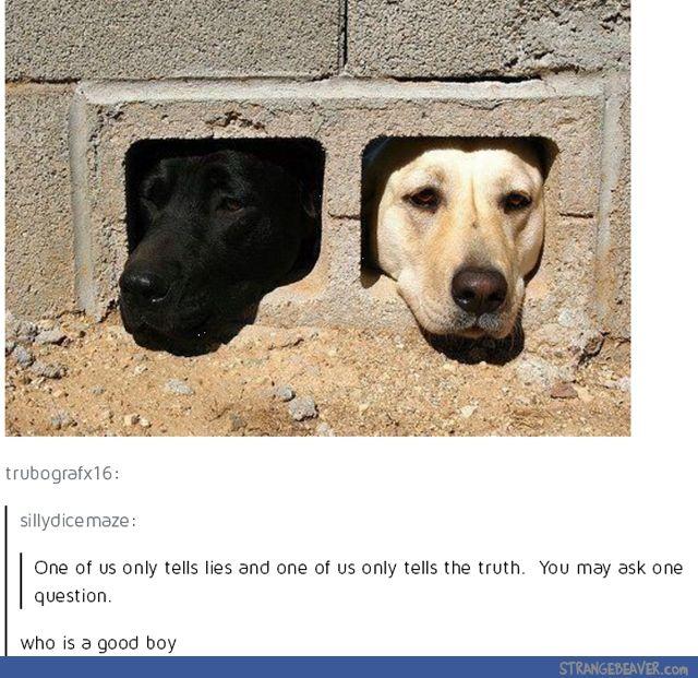 Tumblr Tuesday 6 21 Cute Funny Animals Funny Animals Animal Memes