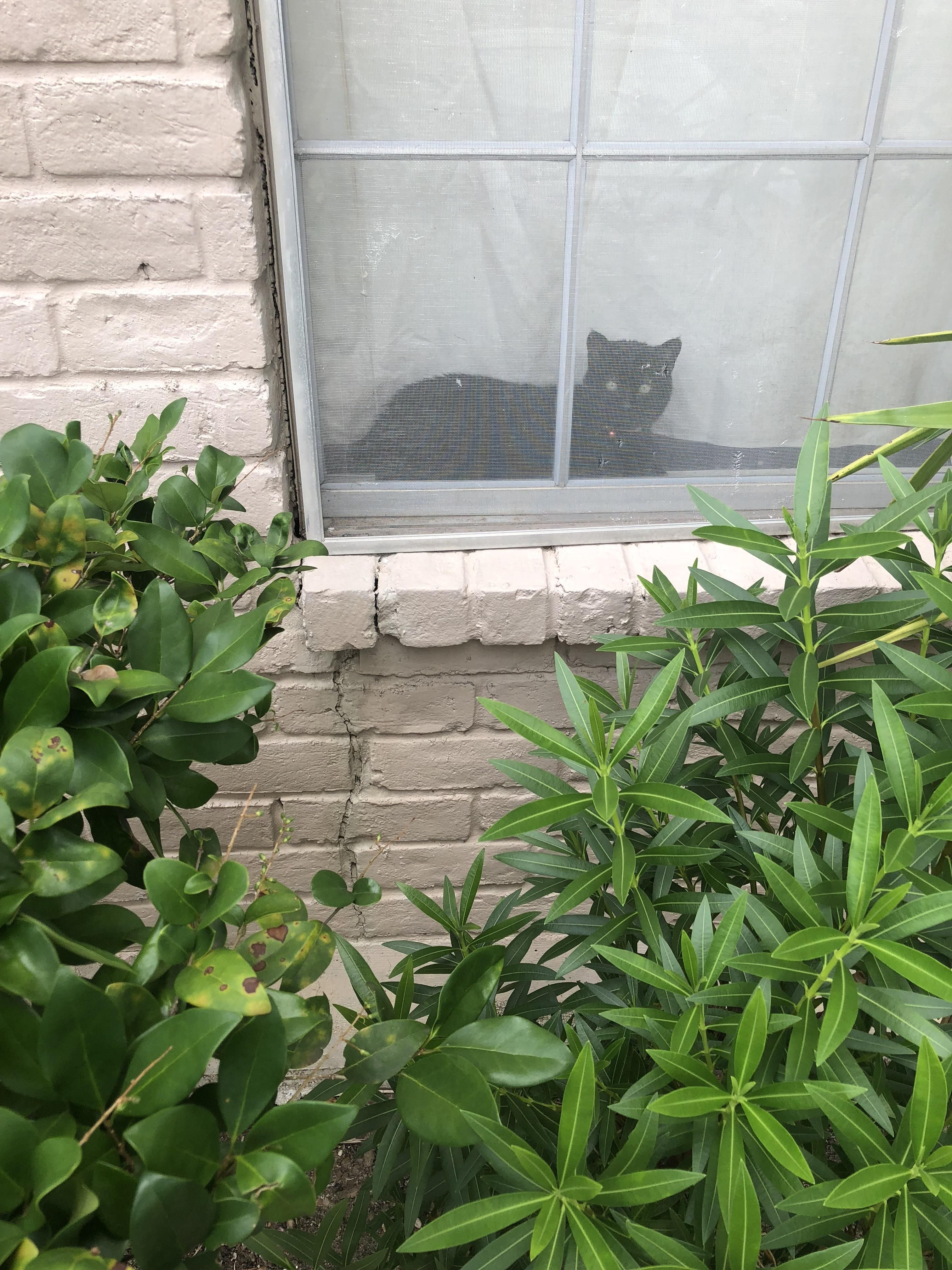 The Smallest Neighborhood Watch Member
