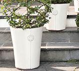 Айседора Planters