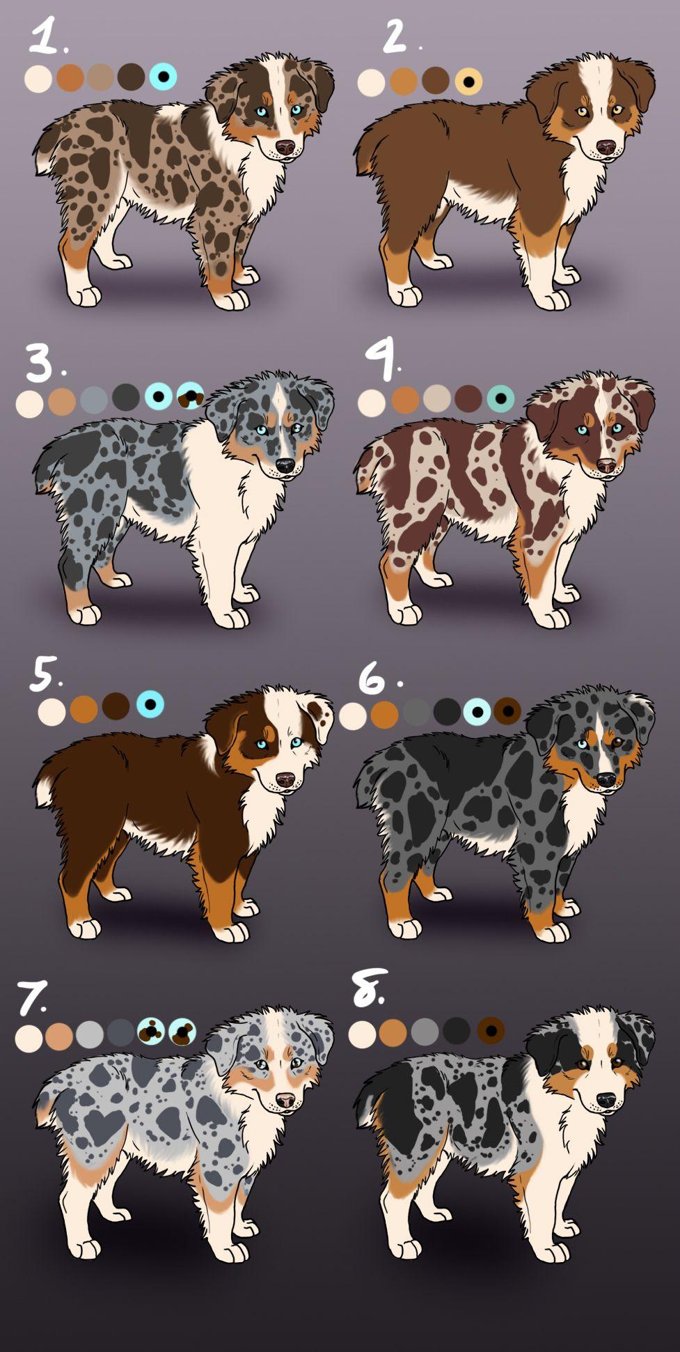 Aussie Pups Custom Breeding: Closed by Sedillo-Ken