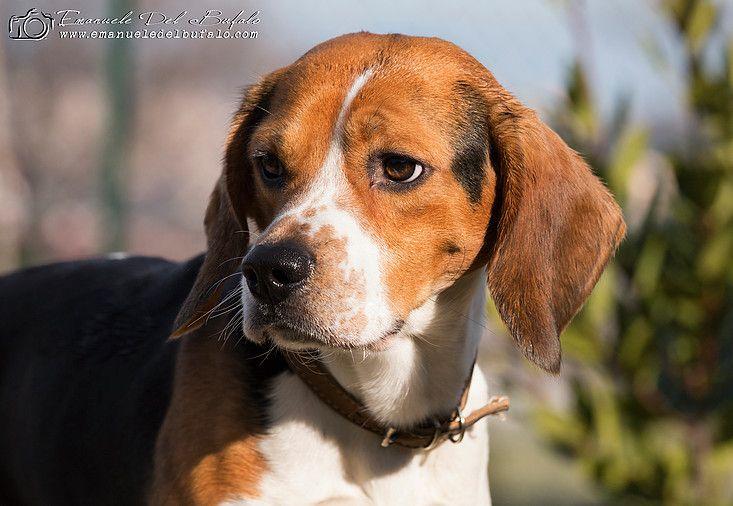 Emanuele Del Bufalo Pet Photography Maki Animal Photography