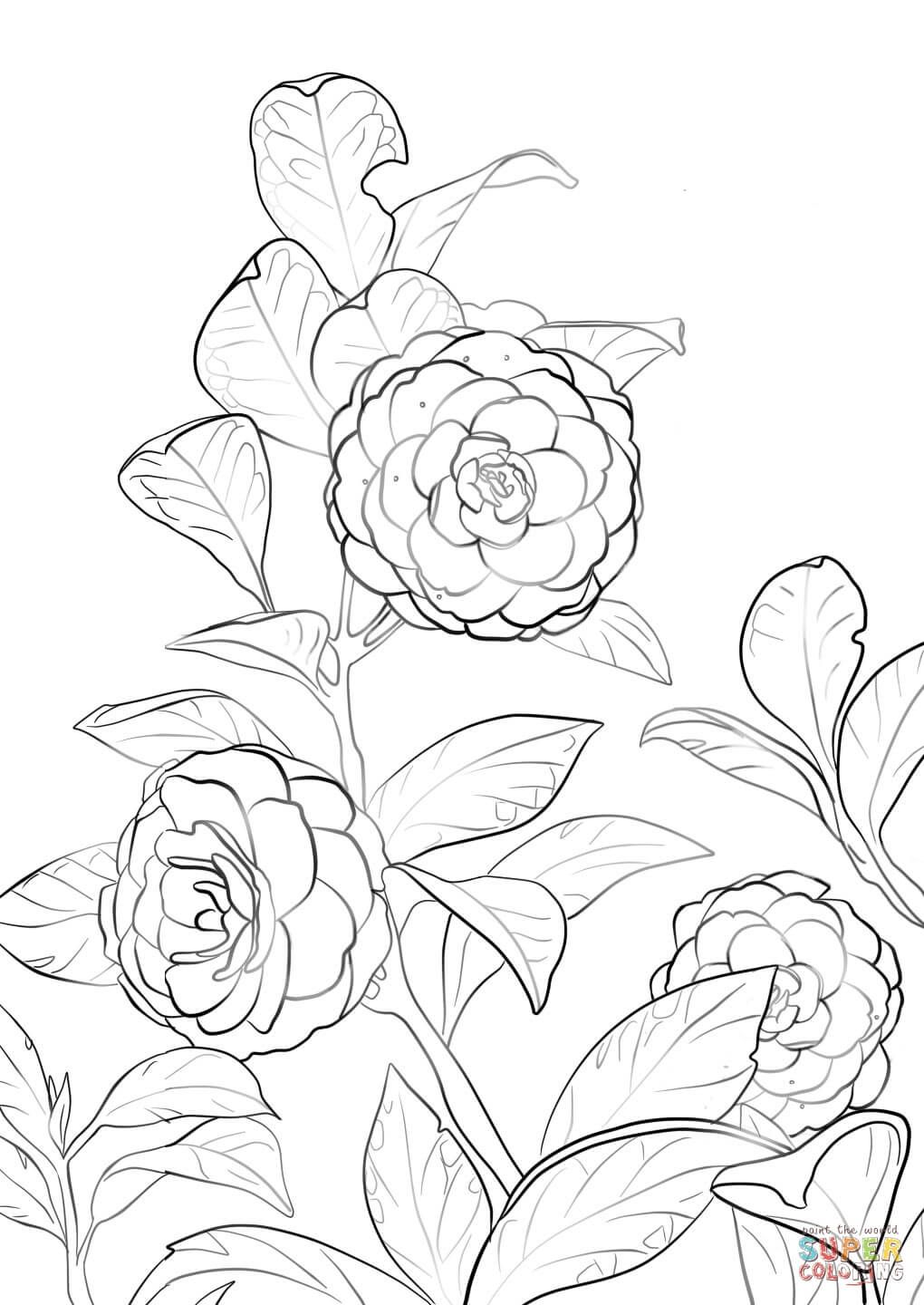 Japanese Camellia Flower Coloring Pages Flower Drawing Tree Coloring Page
