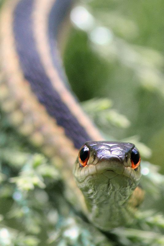 This Is My Space Garter Snake Cute Snake Beautiful Snakes