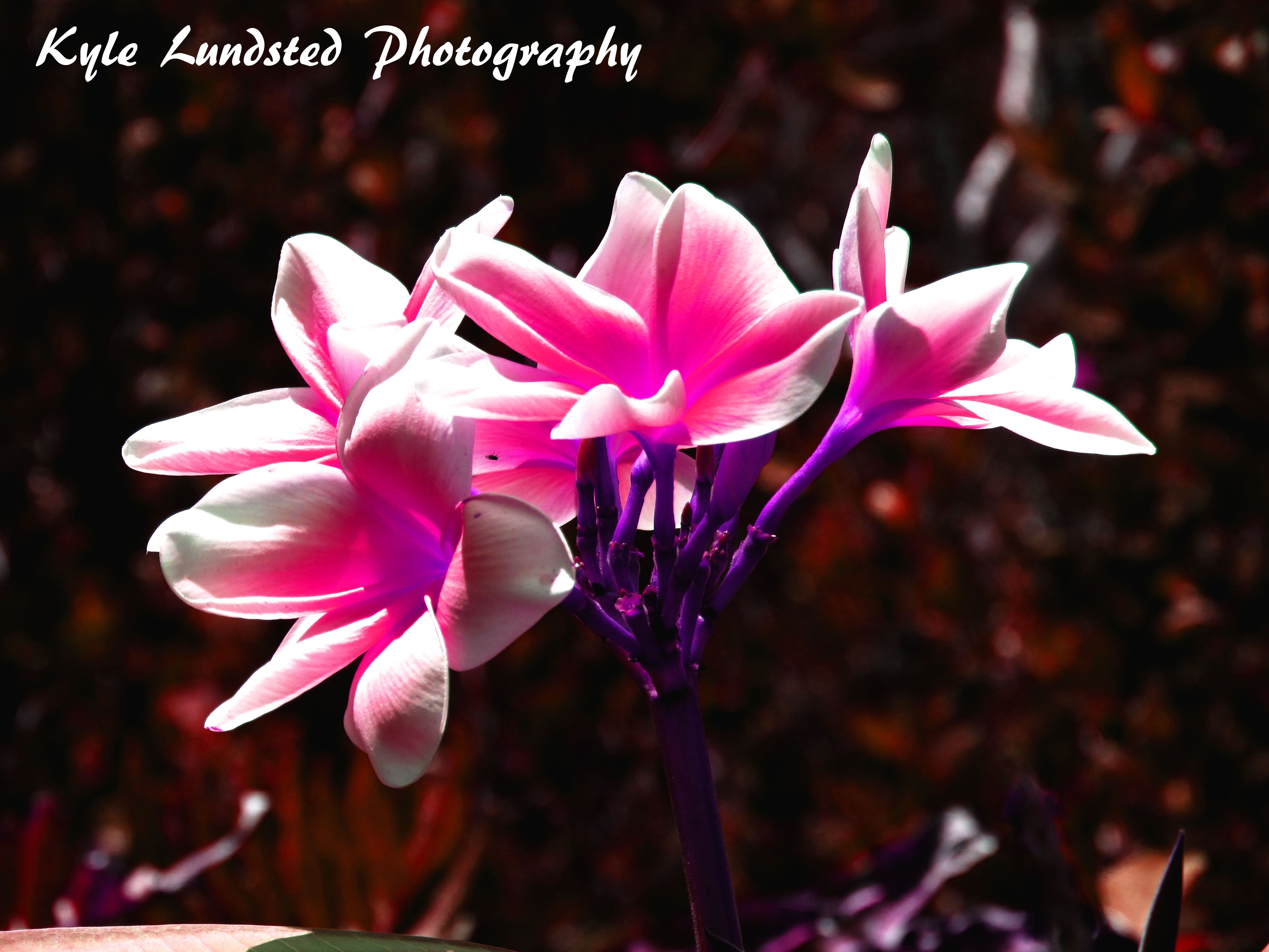 The most beautiful flower I have ever seen at Naples Zoo taken by a Canon PowerShot SX510 HS.