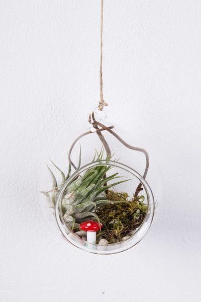 glas kugel mit tillandsien zum aufh ngen von geschenke werkstatt auf geschenke. Black Bedroom Furniture Sets. Home Design Ideas