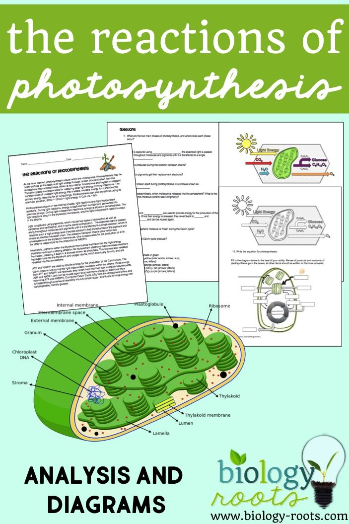 Photosynthesis Reading and Coloring Photosynthesis