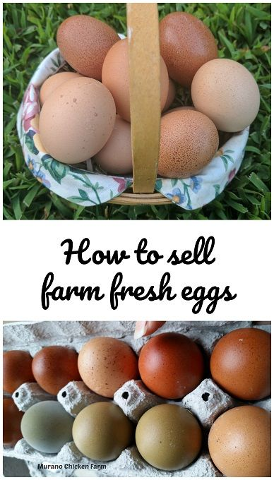 Selling Fresh Eggs Best Egg Laying Chickens Egg Laying Chickens Fresh Eggs