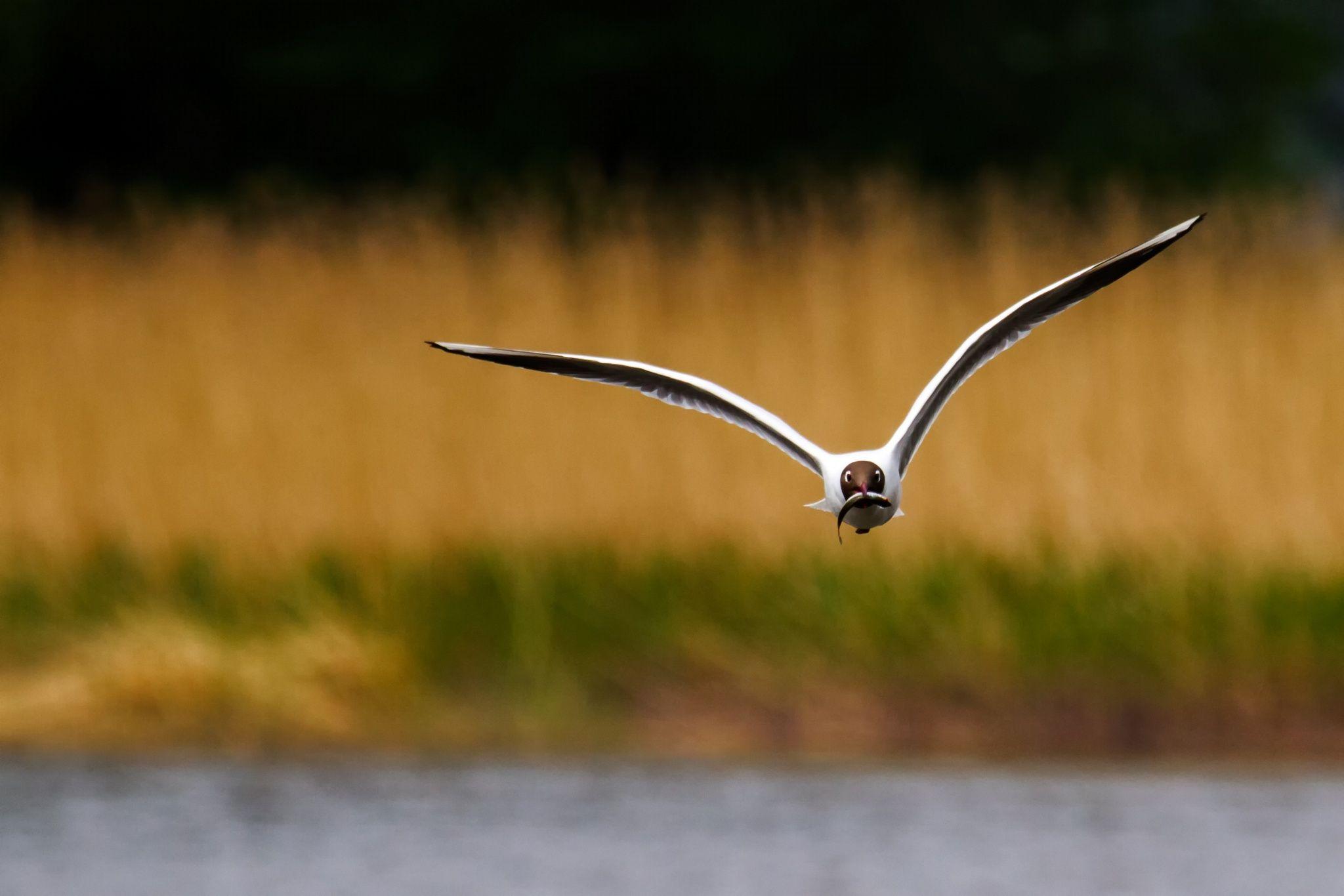 Seagull by Jussi Vepsäläinen on 500px