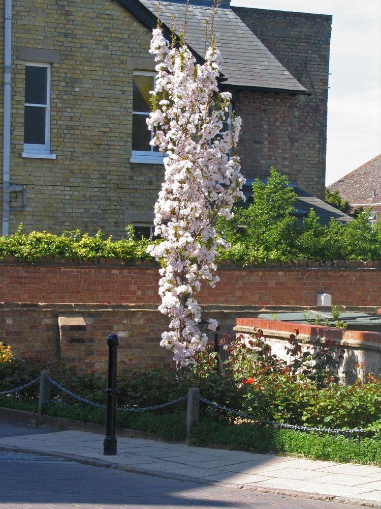 Pin On Gardening Columnar Trees Shrubs 400 x 300