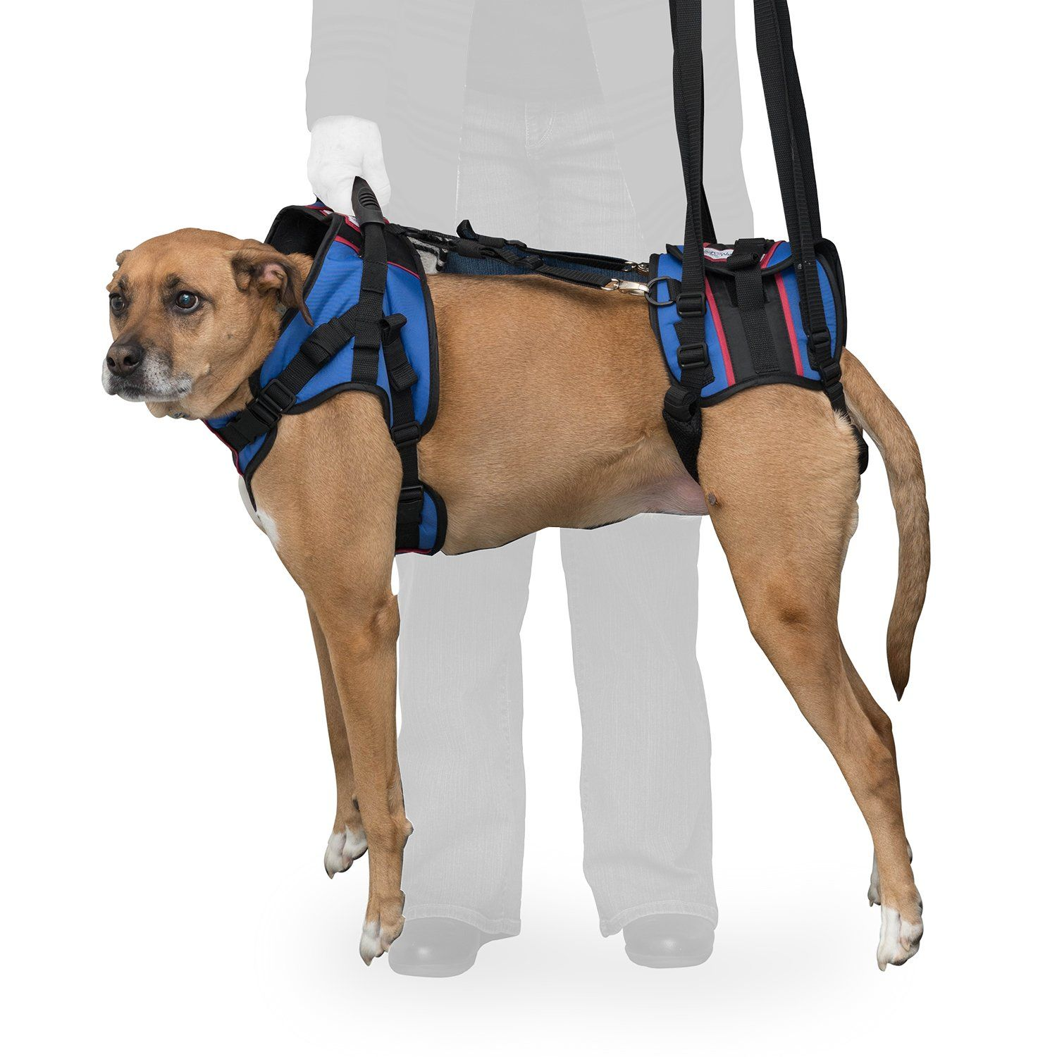 Walkin Lift Full Support Harness For Medium Dogs 5069 Lbs Visit The Image Link More Details It Is Amazon Affiliate L Dog Wheelchair Dog Sling Dog Harness
