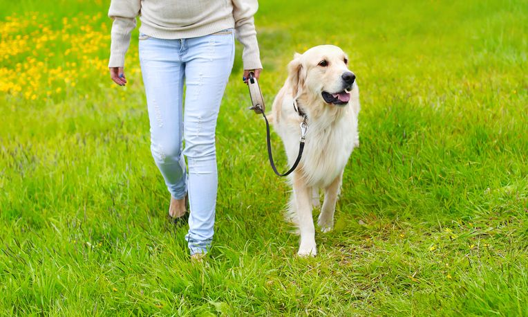 5 Tips For Polite Leash Walking Like A Pro Dogs Golden Retriever
