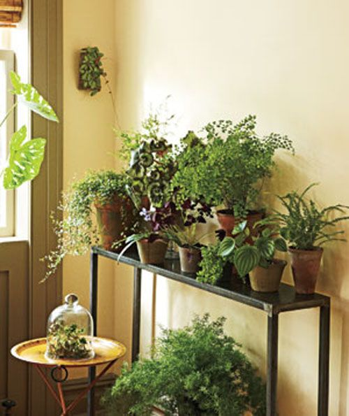 Small plants decoration for small space family room for Indoor greenery ideas