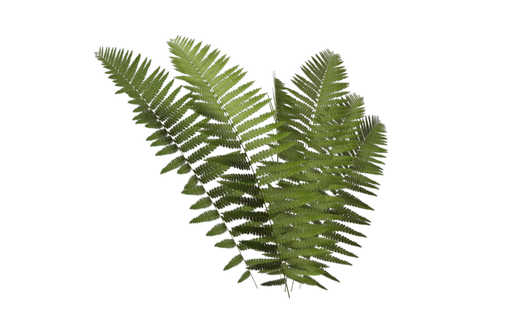 fern 04 by wolverine041269 png plants pinterest fern. Black Bedroom Furniture Sets. Home Design Ideas