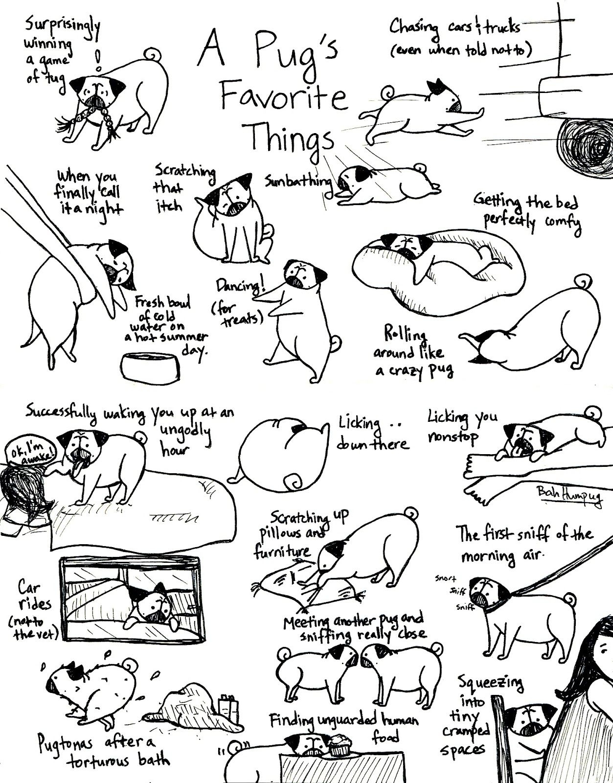 A Pug S Favorite Things Part Ii If You Are Crazy For Pugs You