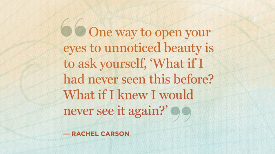 60 Quotes To KickStart Real Change Dream Building Quotes Quotes Inspiration Rachel Carson Quotes
