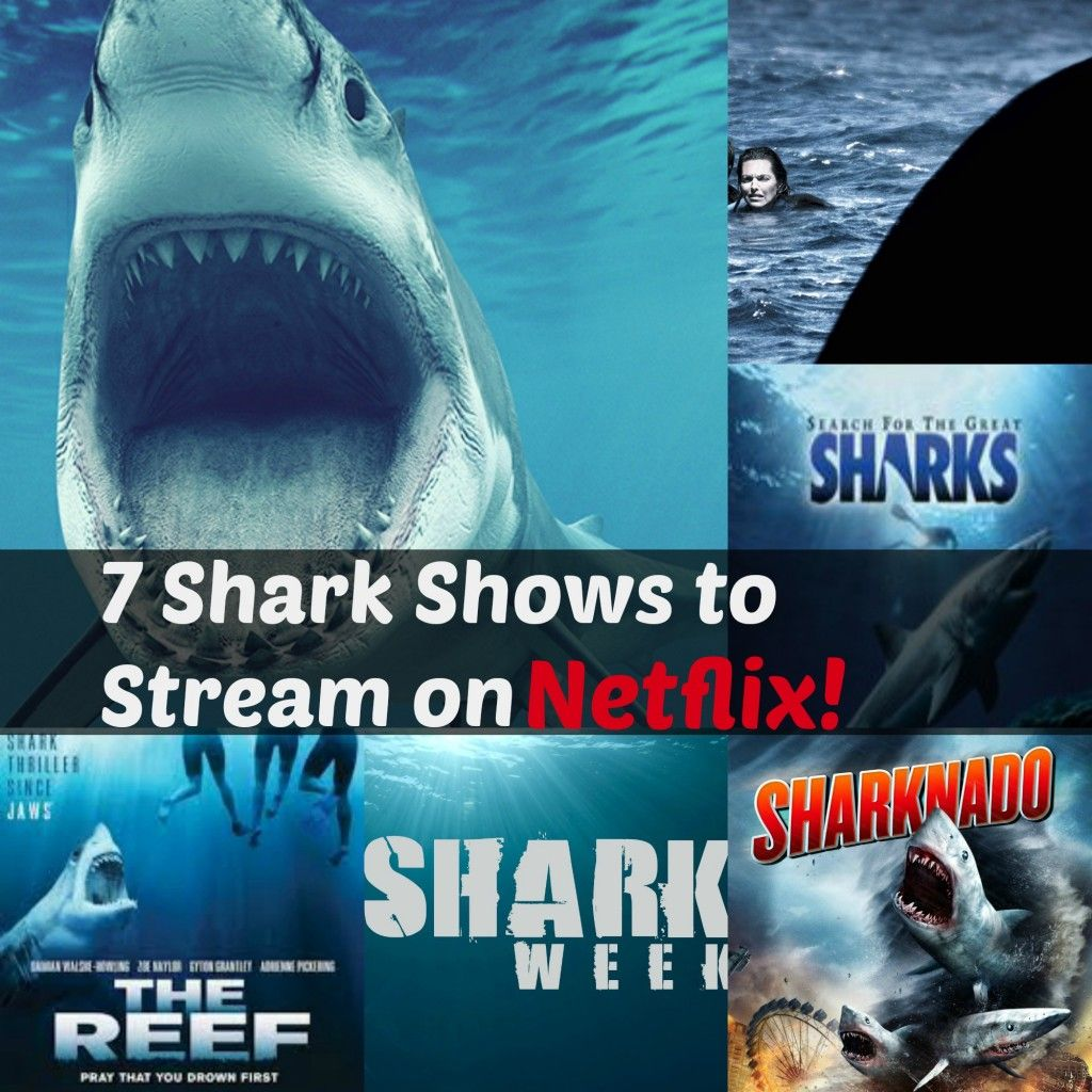 7 Shark Shows to Stream on Netflix | Best of Life Without