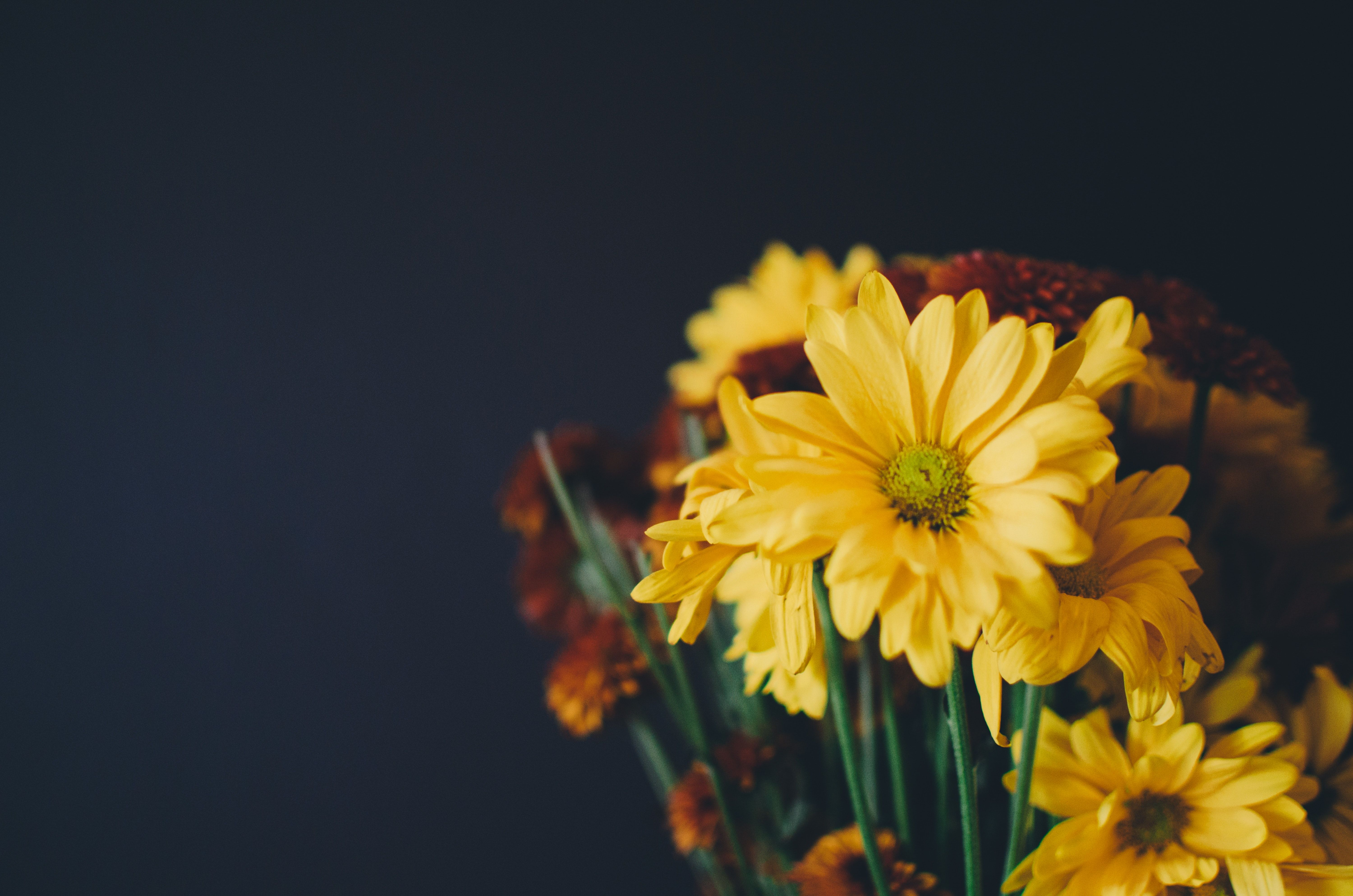 Close Up Of A Bouquet With Yellow Daisy Flowers Photography
