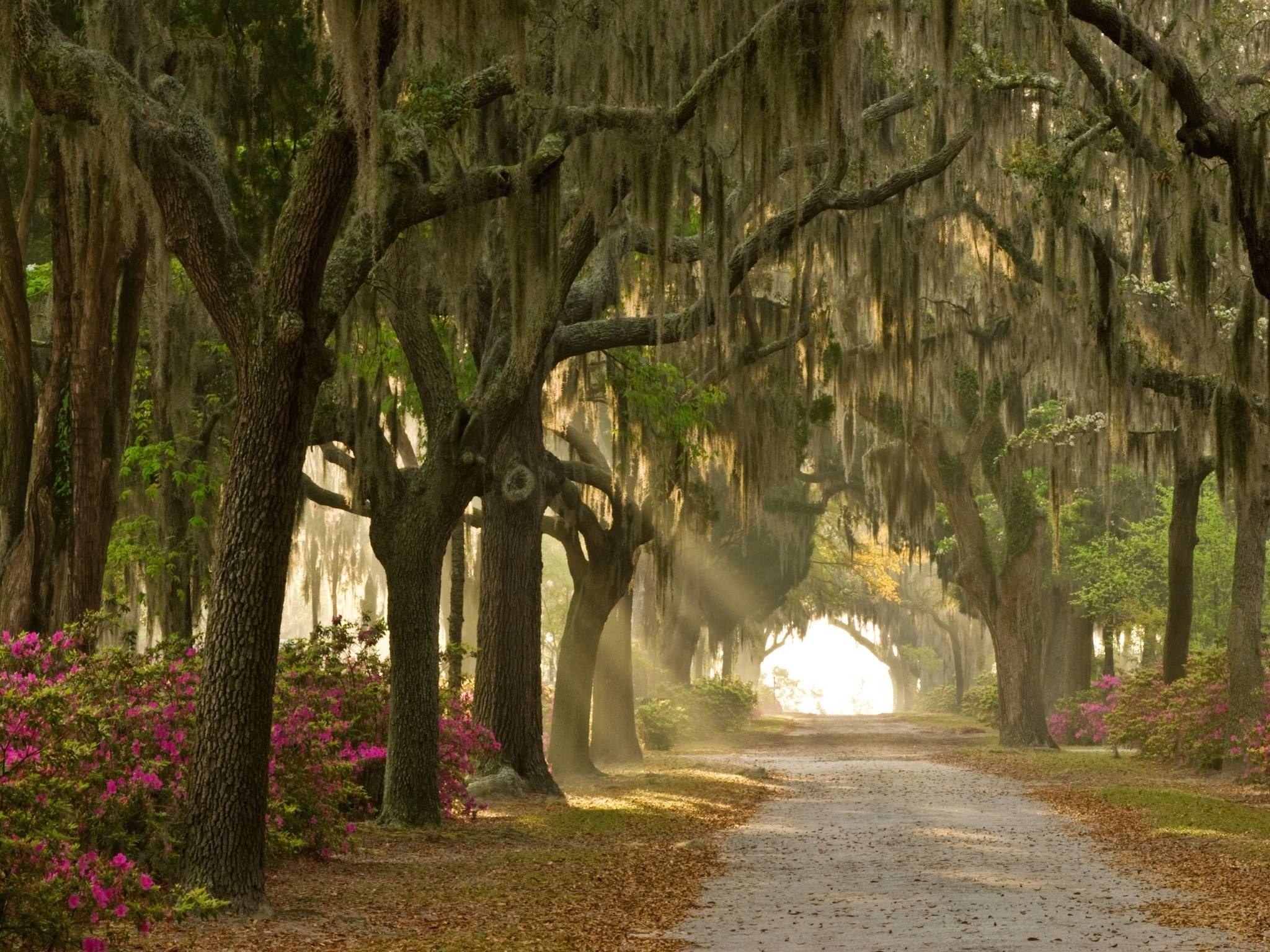 The Best Halloween Cities In America Bonaventure Cemetery - The 7 spookiest cities in america