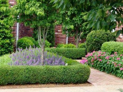 Katalog Proizvoda Drvene Kuce Vrtne Kucice Ukrasno Drvece Suncobrani Standovi Boxwood Landscaping Boxwood Garden Dwarf English Boxwood