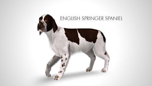 Pin By Trudie Opperman On Pets Sims3 Sims 4 Pets English Springer Spaniel Sims Pets